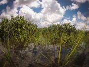 Salt marsh in Redfish Bay, Texas. Credit: Charles Foster, University of Texas Marine Science Institute.